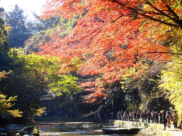 滝めぐり遊歩道にも美しい紅葉が広がる