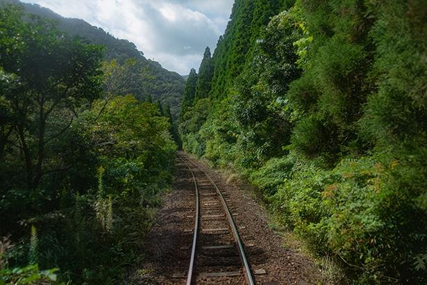 飫肥杉の森では、鮮やかな緑と空が眩しい!