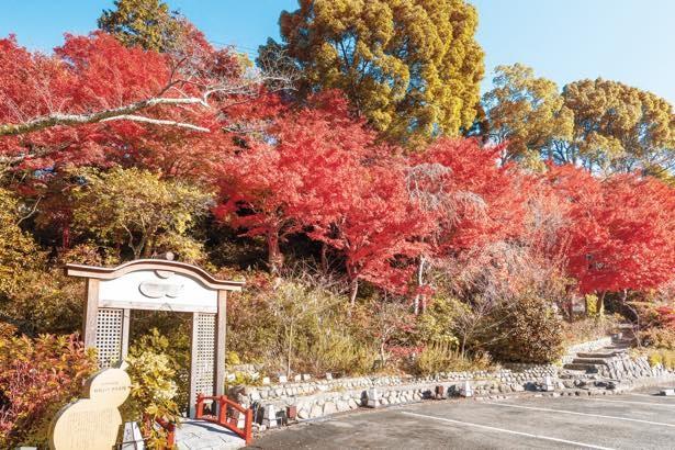 施設内の太閣四季彩園から官兵衛古道までをライトアップ
