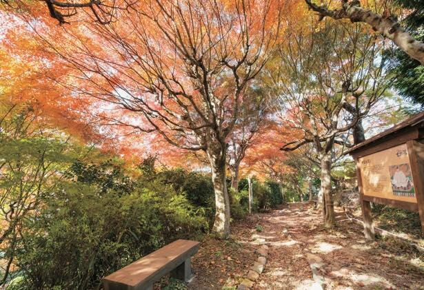 秋のおでかけにぴったり!有馬の紅葉名所で絶景を楽しめる