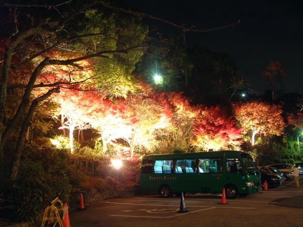 有馬地域でライトアップされた幻想的な紅葉を見られるのはここだけ