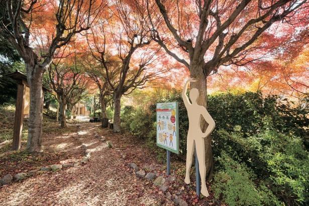 昼間と夜で異なる表情を見せる園内の紅葉