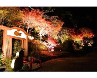 夜ならではの幻想的な紅葉狩り!有馬地域の紅葉名所で唯一のライトアップイベント開催