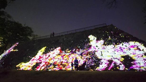 大天守台跡の石垣に住まう花と共に生きる動物達 / Animals of Flowers, Symbiotic Lives in the Stone Wall - Fukuoka Castle Tower Ruins