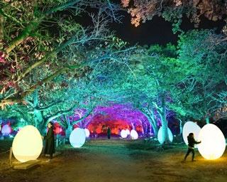 福岡城跡が光のアート空間に!「チームラボ 福岡城跡 光の祭」が開催