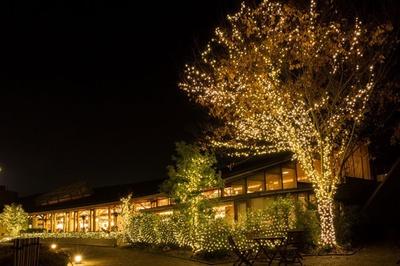 武雄市図書館 / 夜の図書館をイルミネーションが幻想的に照らし出す