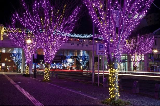 JR伊万里駅 / 楠の木が色鮮やかにライトアップ