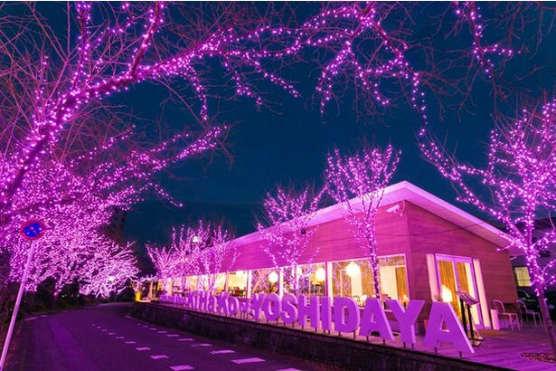 旅館 吉田屋 / きらびやかなイルミネーションを満喫