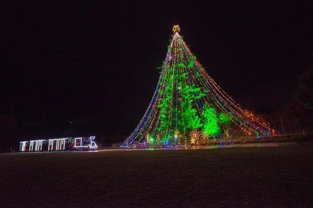 高さ30mを超えるモミの木がライトアップ