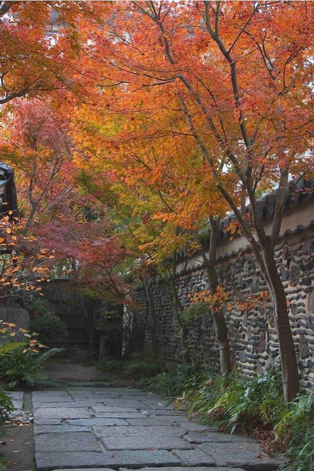 楽水園の紅葉 / 都会のオアシスの中で美しく色づく紅葉