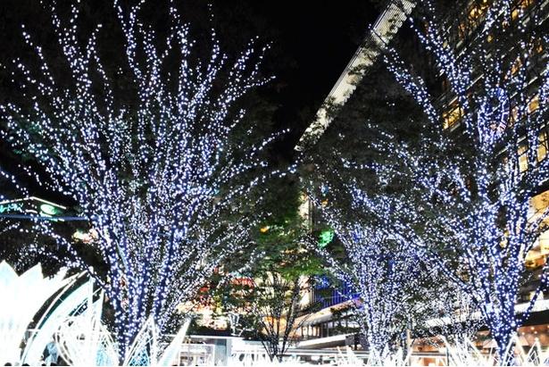 【写真を見る】木々も光に包まれて幻想的な雰囲気に