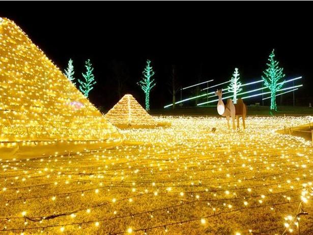 夜の植物園で約35万球の電飾が彩る光の世界を堪能 / フラワーパークかごしま