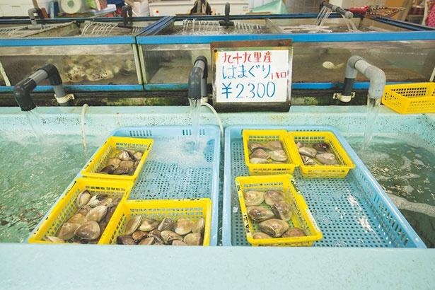 直売所では九十九里産のハマグリなど、みやげ用の貝も購入できる