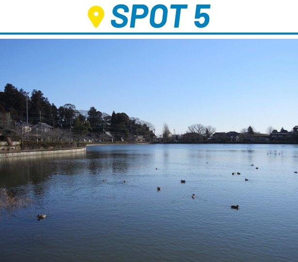 冬には野鳥が飛来する八鶴湖。サクラの季節には約300本のサクラがライトアップされる「東金桜まつり」が開催される