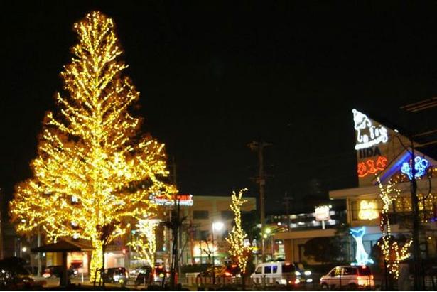 """志免町のシンボルツリーに""""希望の光""""が灯される ※画像は昨年の様子 / 中の坪公園"""