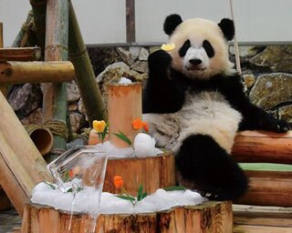 パンダやイルカなど、人気者に会いに行こう!関西のファミリー向け動物園&水族館10選