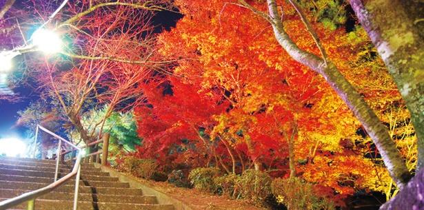 曽木の滝公園もみじ祭り / 滝と紅葉の競演が見事