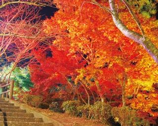 秋冬おでかけシーズン!11月と12月に開催される鹿児島のイベント5選