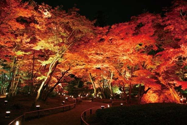 11月8日~12月1日(日)はライトアップされた紅葉が観賞できる夜間特別拝観を開催/天龍寺塔頭 宝厳院「秋の特別拝観」