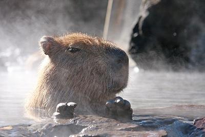 「カピバラの露天風呂」は同園が元祖と言われている