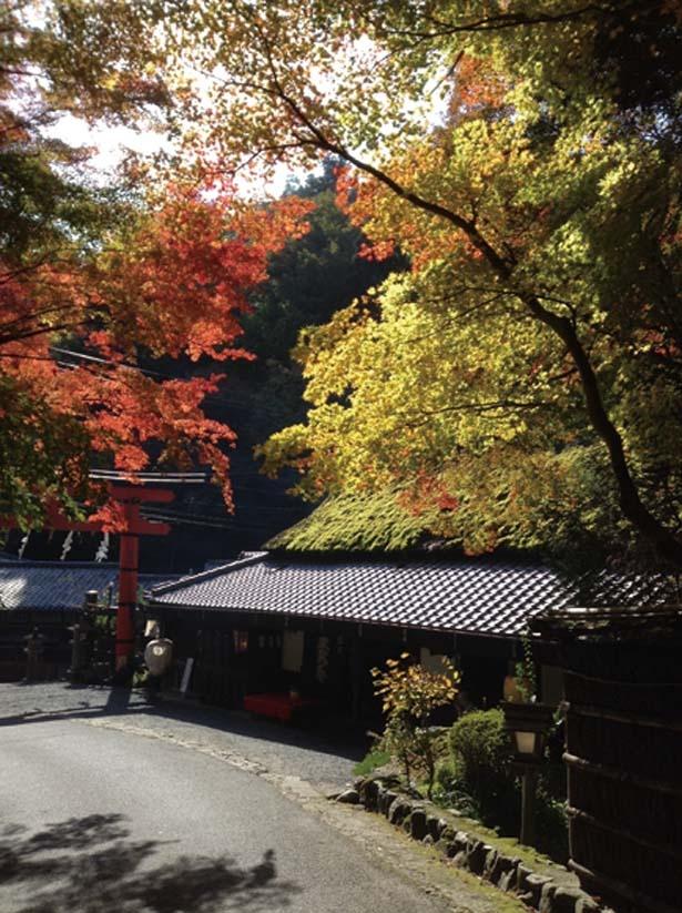 愛宕(あたご)神社の一の鳥居のたもとに立つ。赤もうせんの床机で、昔なごりの風情を楽しんで/平野屋