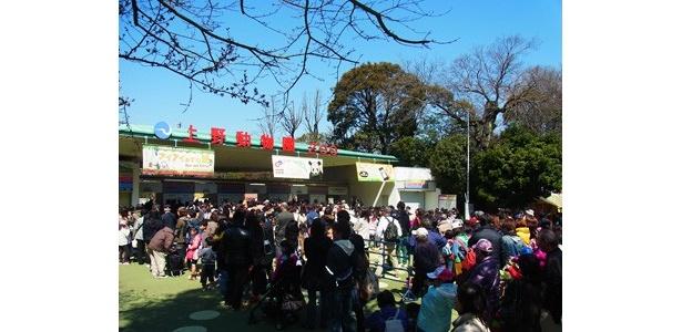 4月1日(金)、延期されていた恩賜上野動物園のパンダ「リーリー」と「シンシン」の一般公開がついにスタート。入場ゲート前には、前日から徹夜で並んだ人もいる程だった