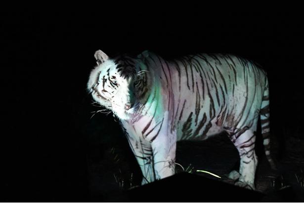 暗闇に浮かぶシルエット、茂みに輝く瞳…肉食動物たちの迫力に息を呑む