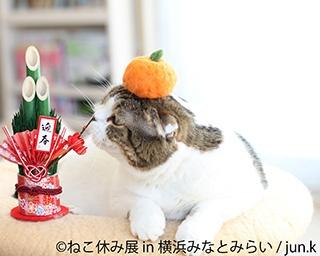 冬らしい癒しの猫が大集結!新作を含め400点以上!「ねこ休み展 in 横浜みなとみらい」開催!