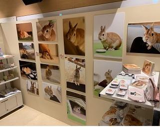 動物と触れ合える「オービィ横浜」にて「うさぎしんぼる展」開催中!