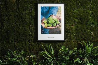 壁に飾られるメキシコの自社有機農場の写真は、ニュートリライトの品質へのこだわりを表現