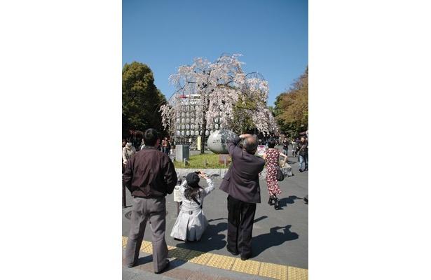 桜をカメラに収めようとする人々