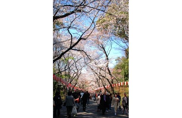 恒例の「うえの桜まつり」が中止になった上野公園。既に設置されているぼんぼりも点灯されない