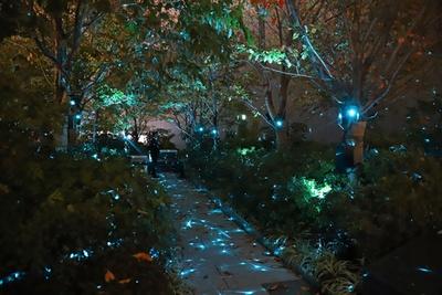 星のように光が輝く木々の中を回遊できる「森エリア」