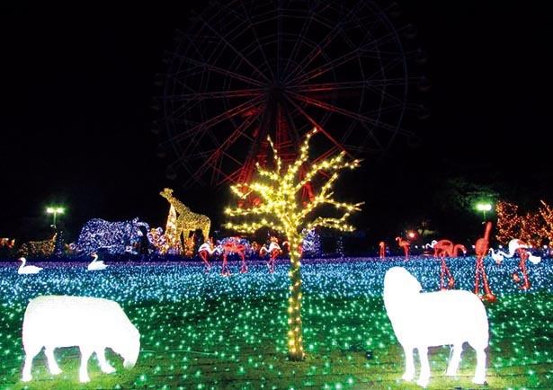 光の花畑は広さ8000平方メートルを誇る / 東武動物公園