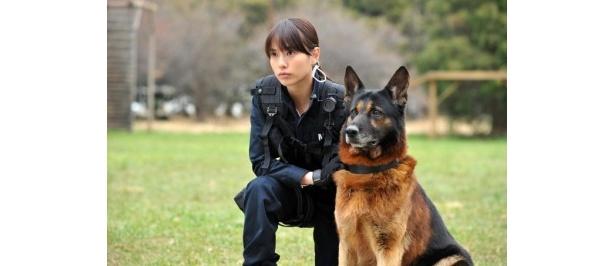 警備犬を扱うために事前に訓練を重ねた戸田恵梨香