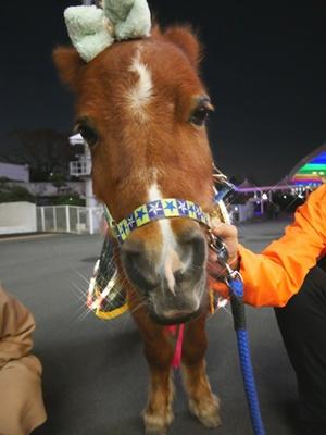 12月は「馬イベント」を毎日実施