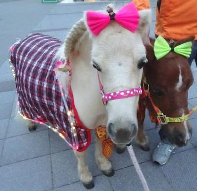 可愛い馬たちがキラキラコスプレで盛り上げてくれる
