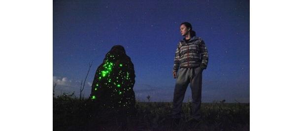 福山は夜になると発光現象が始まるアリ塚に興味を示した(第2回'11年2月放送)