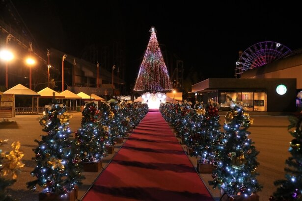 50本のクリスマスツリーがロマンチックな雰囲気を演出する「クリスマスロード」
