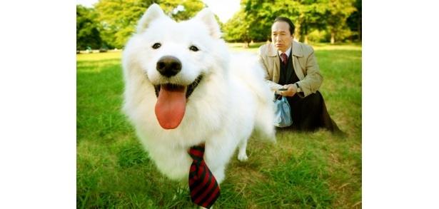 【写真】『犬飼さんちの犬』は6月25日(土)より全国順次公開