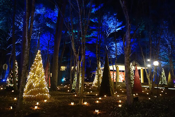 森の中に点在するクリスマスツリーとランタンがやさしく輝く
