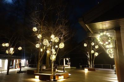 ハルニレテラスの「やどりぎイルミネーション」では、木々やショップの店先にイルミネーションやリースが輝いている。~12月25日(水)16:00~23:00