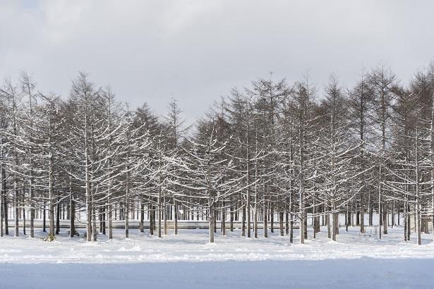 まるで絵画のような雪景色。四季折々に美しい景観を見せてくれる公園だ