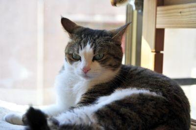 「猫喫茶 ねこのみせ」のご機嫌なポッキーちゃんがお出迎え♪