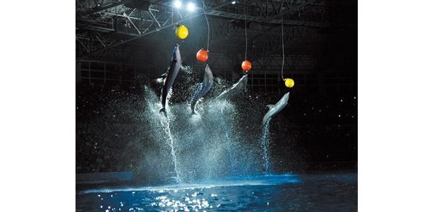 オリジナルソングに合わせて総勢13頭のイルカやクジラたちがダイナミックなライブを繰り広げる「ナイトマリンライブ」