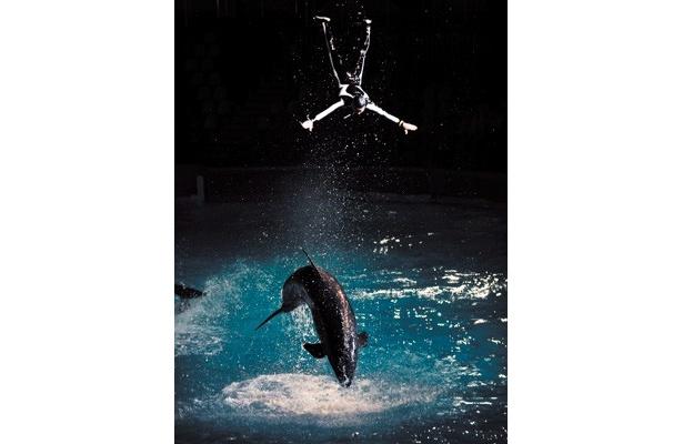 イルカたちの圧巻のライブが見られる「ナイトマリンライブ」
