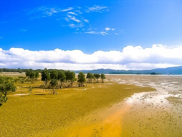 マングローブ林を抜けた先は広大な干潟!干潮時のみ出現する秘密の遊び場です!
