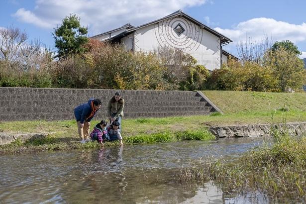 水温10℃以下の川の水に触れ、「きゃ―冷たい!」とはしゃぐふたり。「この魚はなんだろうね」と、パパとママも近寄る