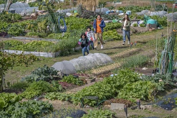 「コレ全部野菜なんだよね!」とうれしそうに走り出すふたり。実にさまざまな野菜が植えられている