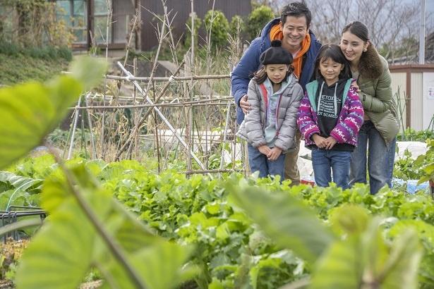 「こんなに近くで植えられている野菜を見るの、初めてだよね」と、一つひとつの野菜に興味津々の子供たち